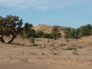 Moroccan Sand Dunes Photo © Rob Shephard