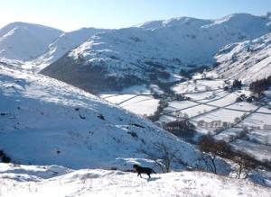 Morgan in the Snow