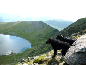 Morgan and Scruffy on Swirral Edge