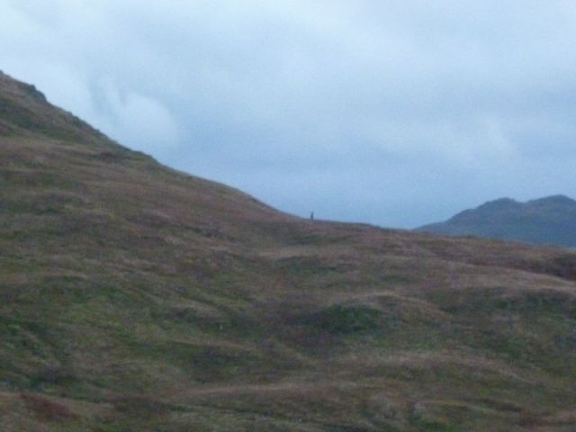 Stag above Ullswater