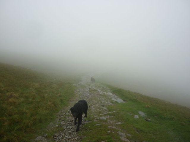 Mist Dogs