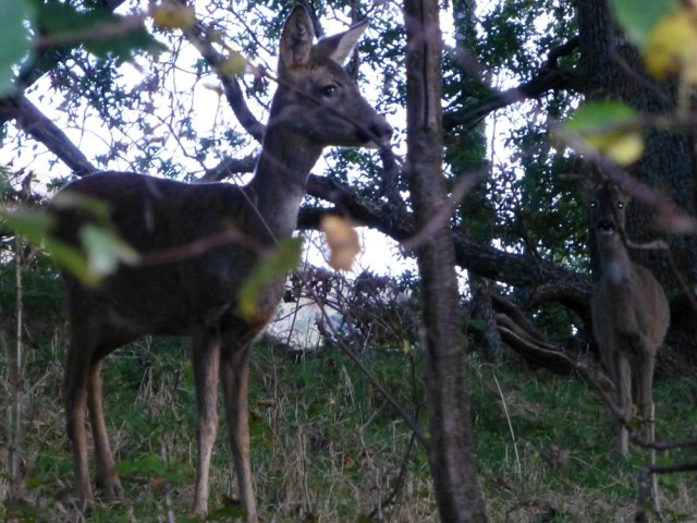 Deer in Patterdale