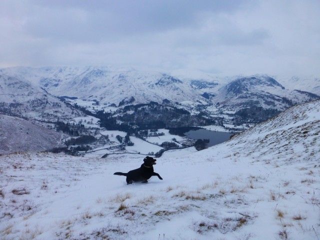 Morgan above Ullswater in the Snow