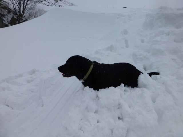 Morgan assesses the depth of the Snow