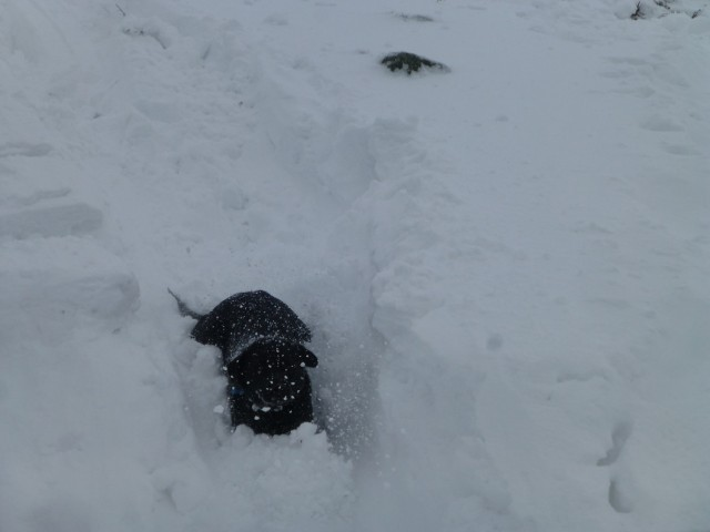 Morgan sledges without the sledge