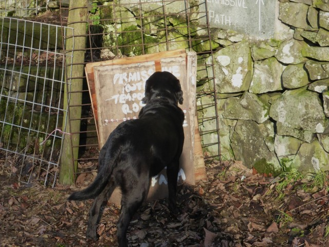 Morgan reads the signs at Crookabeck
