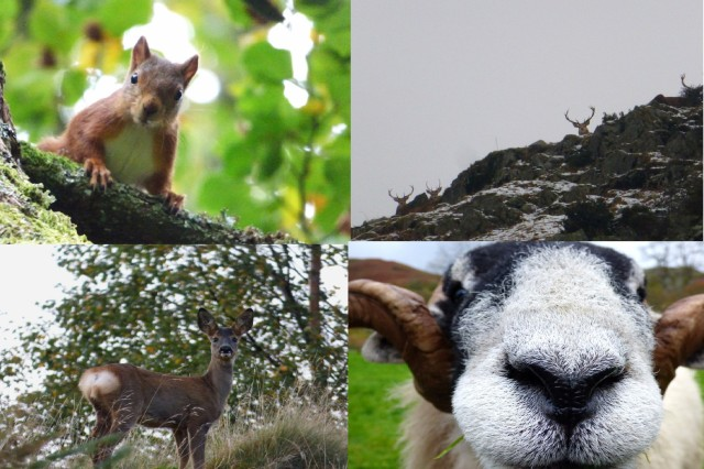 wildlife around Ullswater
